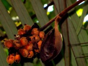 Leticia, Amazonas.