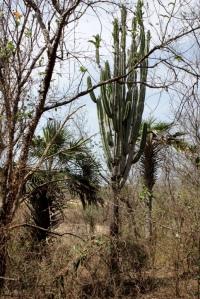 Santuario de Fauna y Flora Los Flamencos, Riohacha, Guajira.