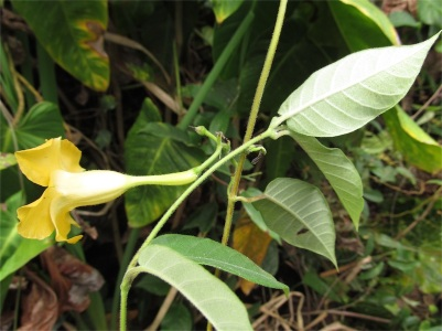 Cachipay, Cundinamarca