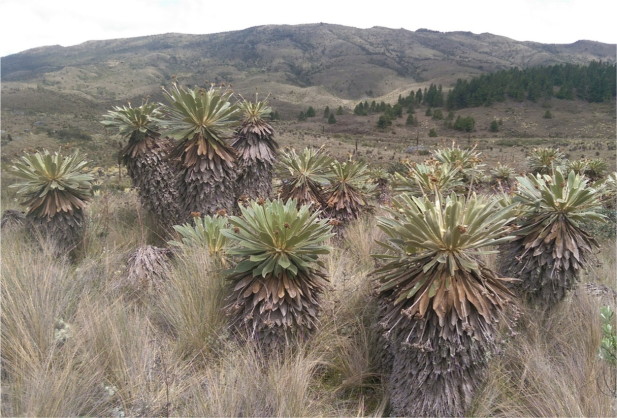 Villa Pinzón, Cundinamarca.