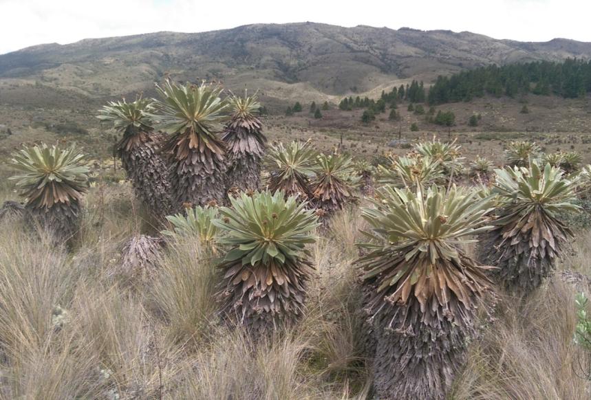 Villa Pinzón, Cundinamarca