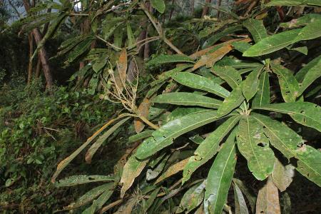 Tena, Cundinamarca